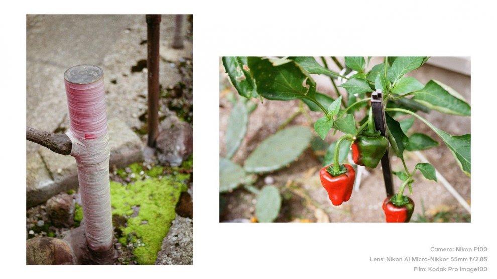 Camera: Nikon F100 / Lens: Nikon AI Micro-Nikkor 55mm f2.8S / Film: Kodak Pro Image100